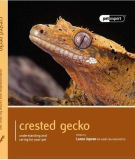 Pet Expert Crested Gecko