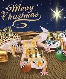 ProRep Christmas Cards (Pk10) L.Geckos Kings