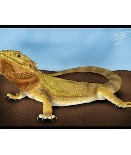 CC Greetings Card Bearded Dragon