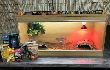 Tortoise Vivarium Set up