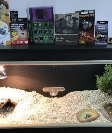 Tortoise Vivarium Set up PLUS Thermostat