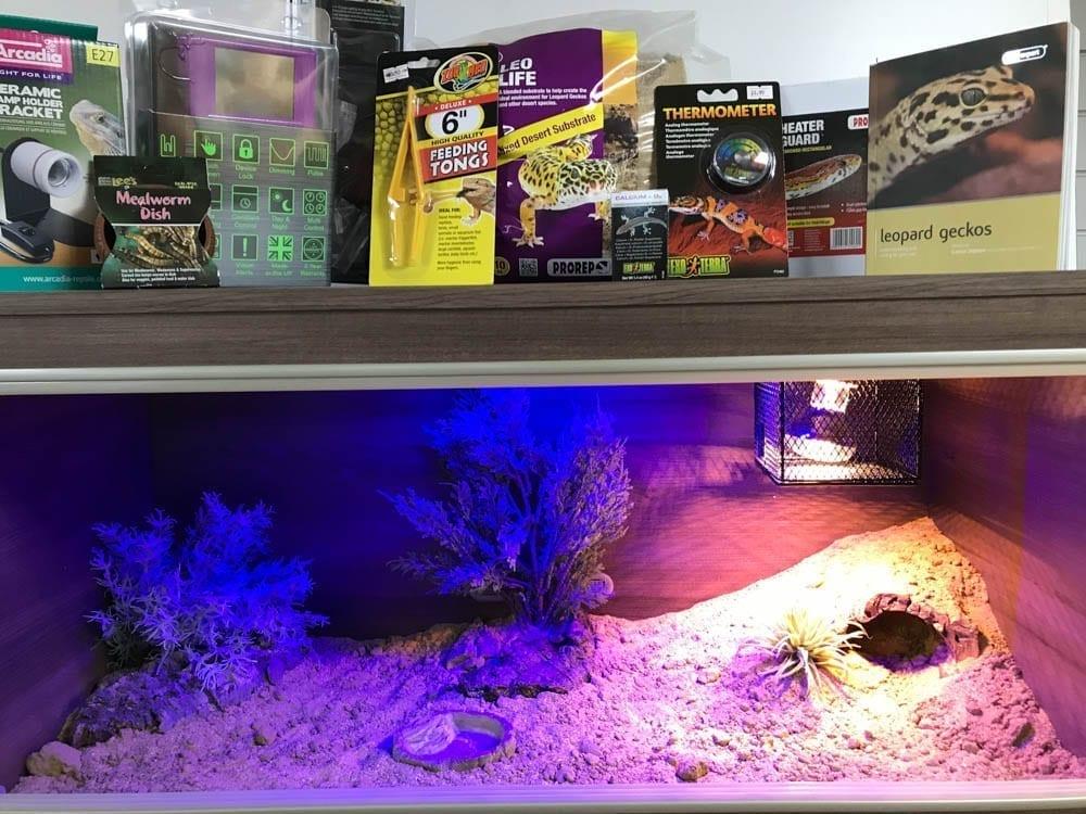 Leopard Gecko Vivarium Set up PLUS Thermostat