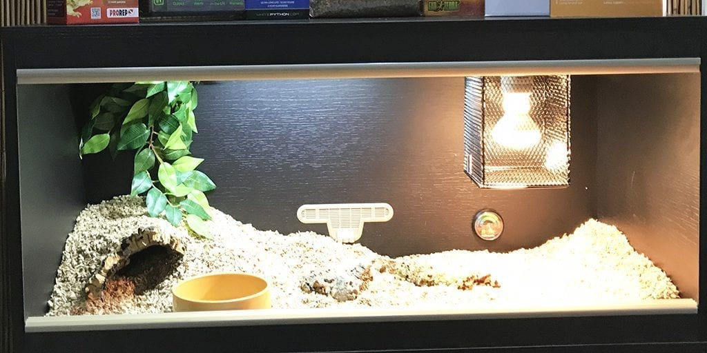 Corn Snake Vivarium Set Up Blackpool Reptiles Aquatics