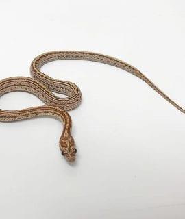 Hypo Masque Tessera het Strawberry JMG Corn Snake CB17