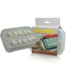 Lucky Reptile Hatchbox Incubation Tray