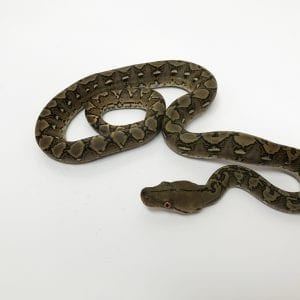 Female Classic het Anery Super Dwarf Reticulated Python CB18