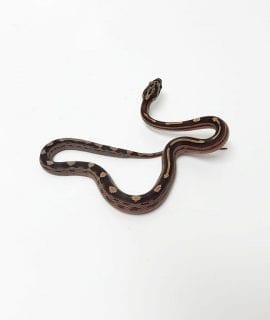 Motley het Amel, Charcoal, ph Stripe Corn Snake CB18