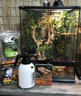 Crested Gecko Large Set up