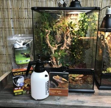 Crested Gecko Large Set up