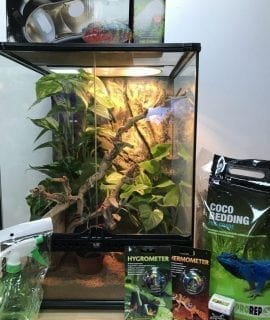 Crested Gecko Set up
