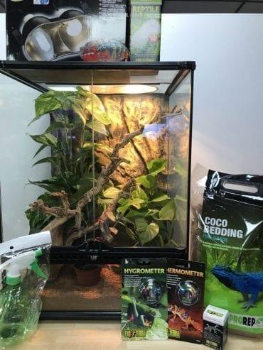 Crested Gecko Set up