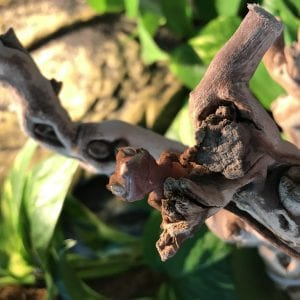 Crested Gecko Set-Up