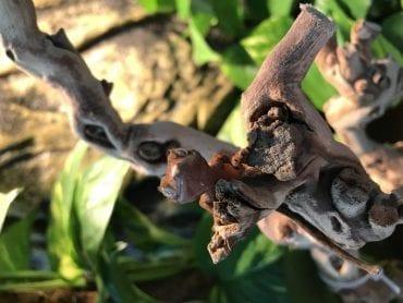 Crested Gecko Set-Up