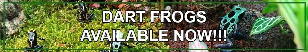 Blackpool Reptiles & Aquatics - High Quality Reptiles for Sale UK