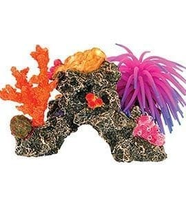 AQ Coral Reef with Anemone