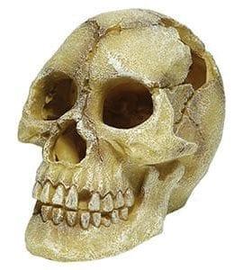 RS Skull Human 12 x 18 x 13cm FP62082