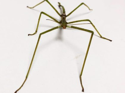 Our Stick Insect Care Sheet