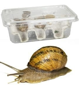 Snails Pre-Pack, 8 x Medium