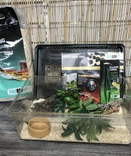 OUR Corn Snake Basic Hatchling Kit