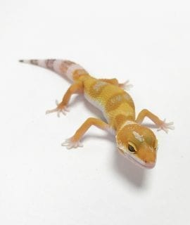 Blackpool Reptiles and Aquatics - High Quality Reptiles for