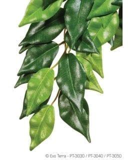 ET Silk Plant Ficus Medium, PT3040