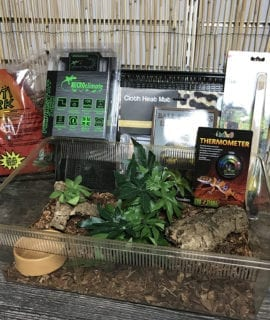 OUR Royal Python Basic Hatchling Kit + Thermostat