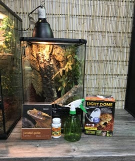 Crested Gecko Starter Kit
