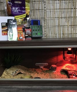 OUR Leopard Gecko Complete Juvenile Vivarium Kit + Thermostat