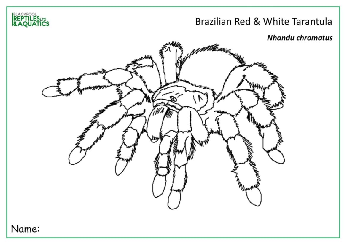 colouring in spider