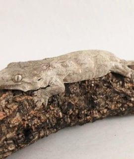 Nuu Ana Leachianus Gecko CB19