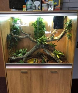OUR Arboreal Lizard Set Up Kit with Cabinet