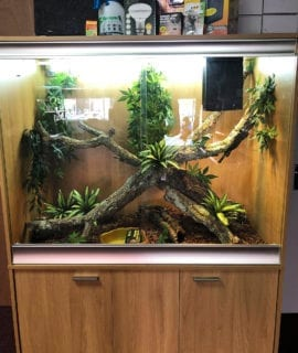 OUR Arboreal Lizard Set up Kit