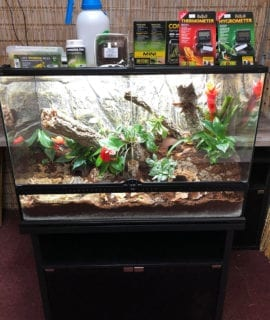 OUR Dart Frog Set Up Kit with Cabinet