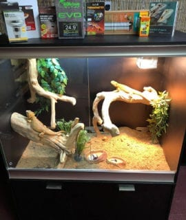 OUR Arboreal Dragon Set-Up Kit with Cabinet