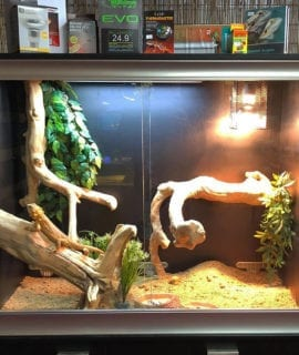 OUR Arboreal Dragon Set-Up Kit