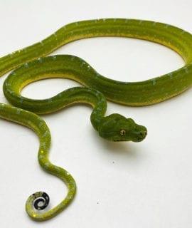 Sorong Green Tree Python CB19