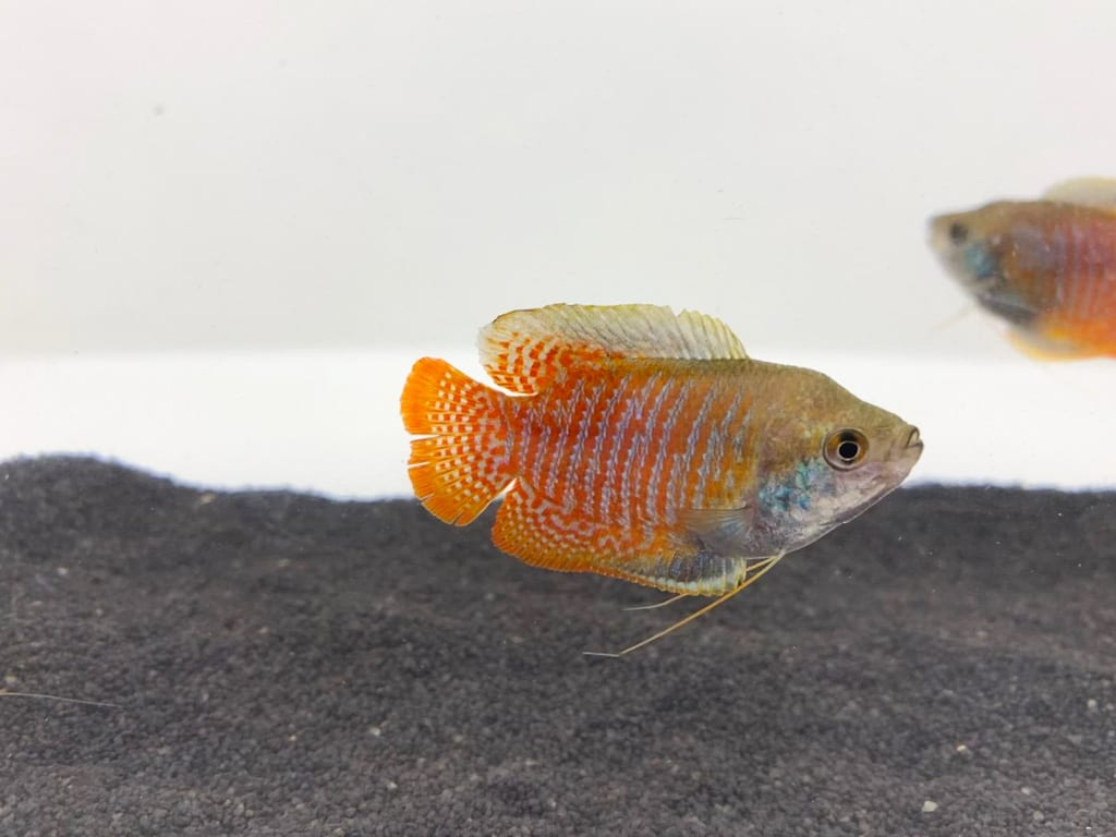 Cold Water Tropical Fish Accessories Decor And Supplies