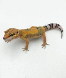 Lavender Super Hypo Tangerine Carrot Tail Leopard Gecko CB20