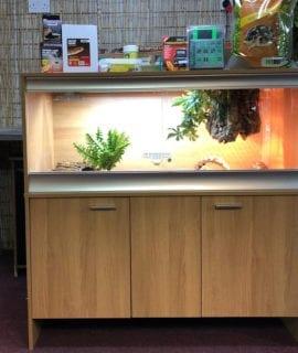 OUR large deep Tortoise vivarium kit with thermostat