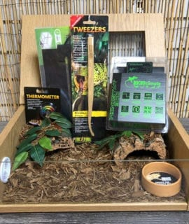 OUR Royal Python 18inch oak set up kit