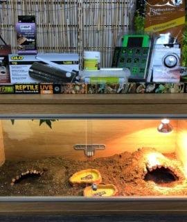 OUR tortoise vivarium set up kit with thermostat