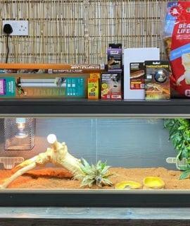 OUR bearded dragon vivarium set up kit