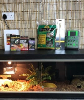 OUR Royal Python large vivarium set up kit with thermostat