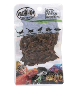 ProBugs Eco Fresh B/Soldier Fly Larvae 20g, 10 PACK