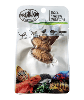 ProBugs Eco Fresh Dubia Cockroach, 5pcs 10 PACK