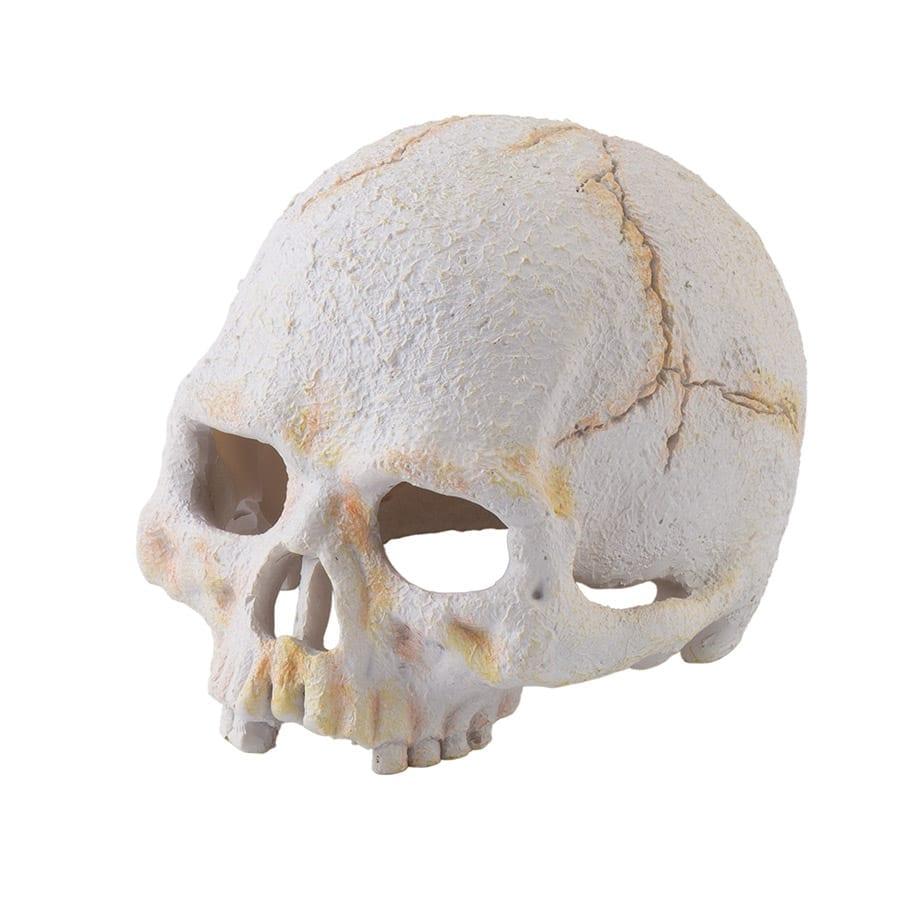 Exo Terra Primate Skull Small PT2926