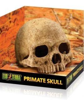 ET Primate Skull, PT2855