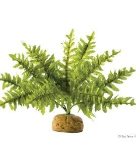 Exo Terra Boston Fern Small. PT-2990
