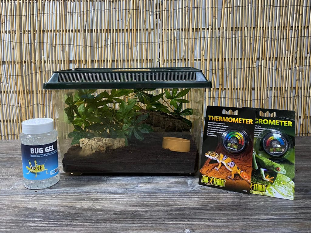 OUR Hissing Cockroach Starter Kit