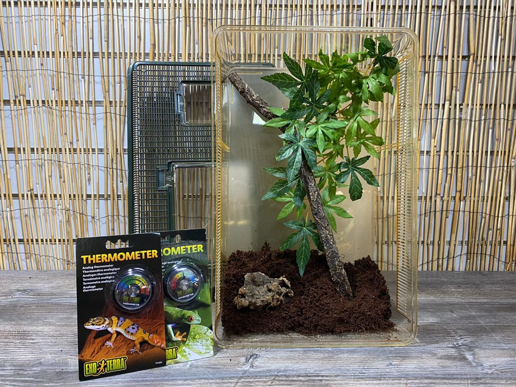 our stick insect starter kit
